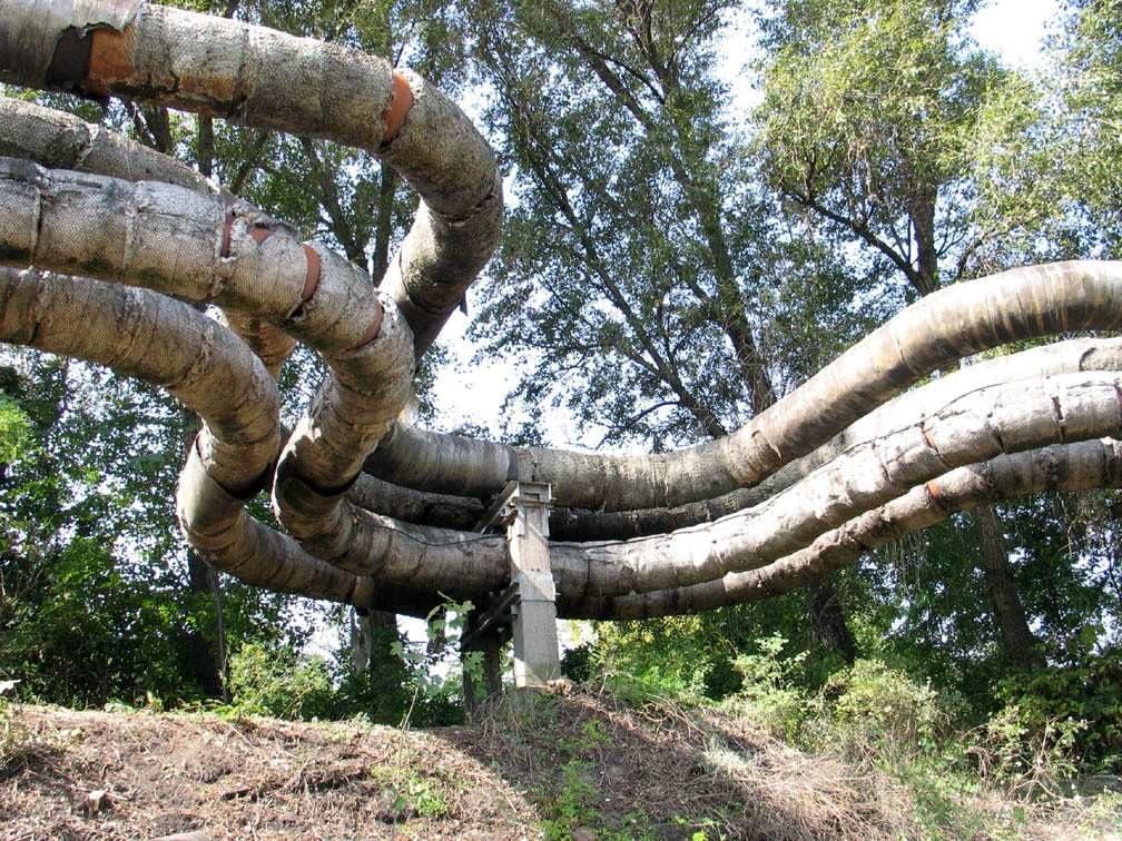 Csőkígyó a volt Brikettgyár telkének határán :
